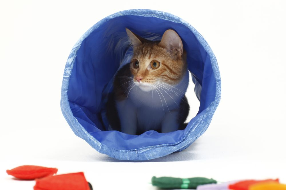 Тоннель для кошек 22х65